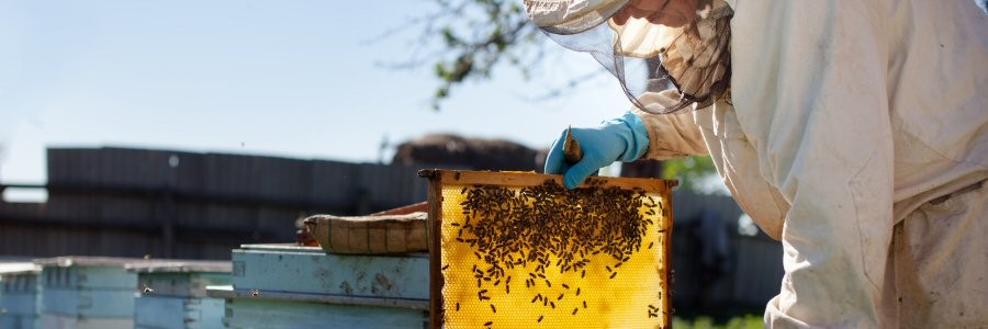 All work conducted by a beekeeper and builder with over 30 years experience