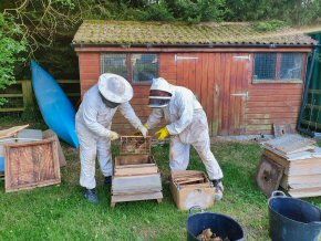 Removing honey bee honeycomb from hive
