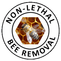Non-Lethal Bee Removal